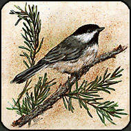 Chickadee painted on ceramic tile.