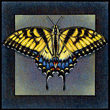 Tiger swallow tail painted on ceramic tile.