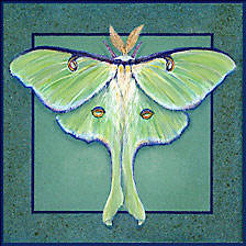 Luna moth painted on ceramic tile.