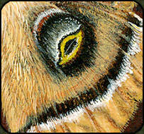 Close up of painted tile polyphemus moth wing.