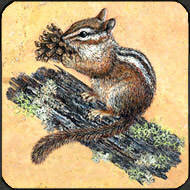 Chipmunk painted on travertine for table top.